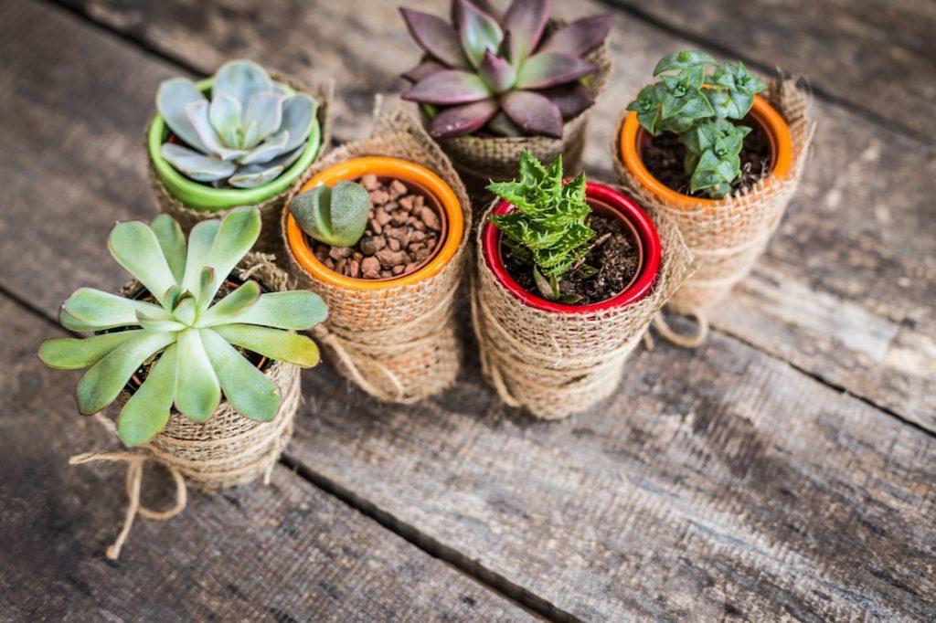استفاده گلدان های کاکتوس و گیاهان آپارتمانی کوچک، زیبا و رنگارنگ