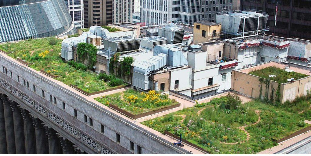 بام سبز در سقف ساختمانی