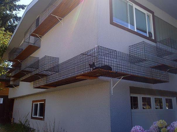 فضای نگهداری گربه ها
